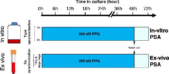 tương quan in vitro và in vivo