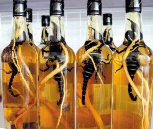 rượu bọ cạp
