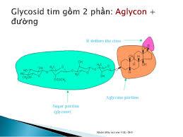 cấu trúc hóa học của glycosid tim