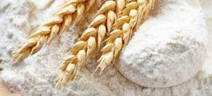 tinh bột mì