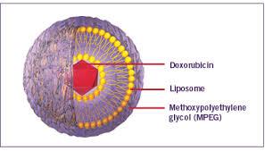 cấu tạo ribosome