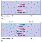 Khuếch tán các chất từ bề mặt dược liệu