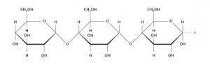 cấu trúc của carbohydrat