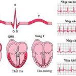 cung lượng tim