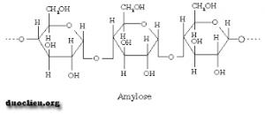 cấu trúc của amylose