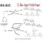 cấu trúc hóa học của tinh bột