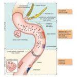 sinh khả dụng của thuốc ở ruột non